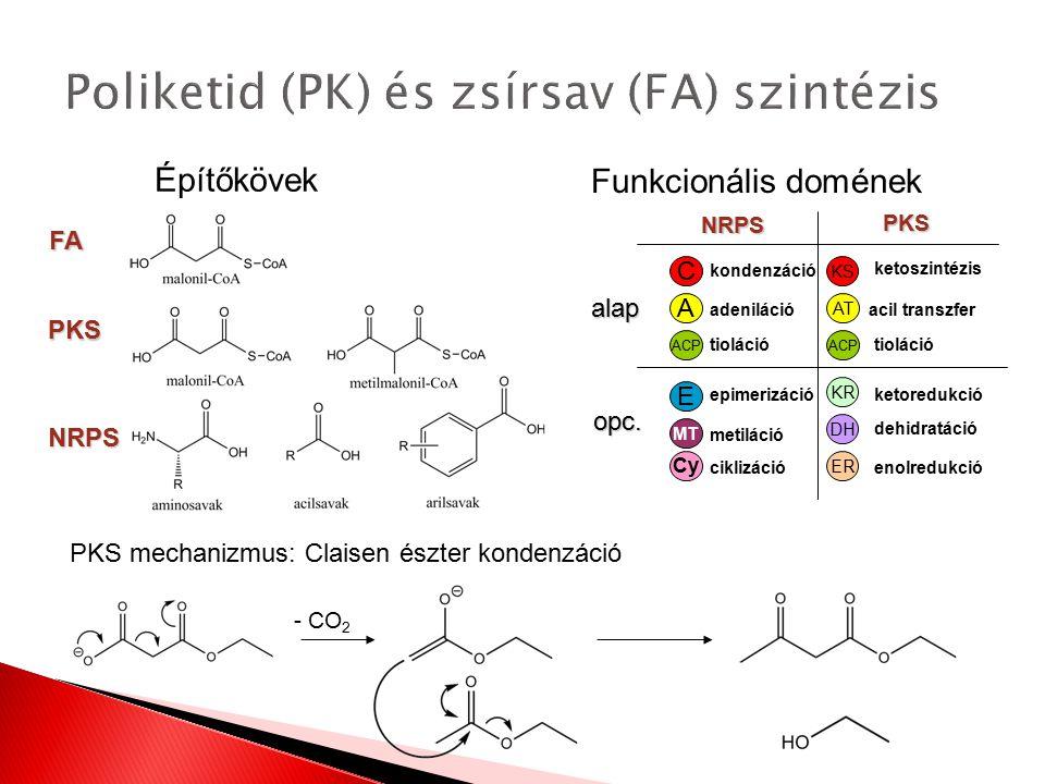 Funkcionális domének FA PKS NRPS - CO 2 C KS A AT ACP E MT KR DH ER kondenzáció adeniláció tioláció epimerizáció metiláció ketoszintézis acil transzfe