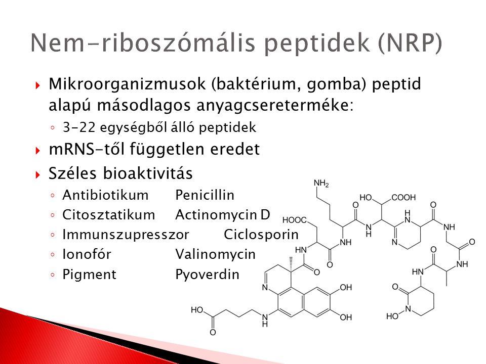  Mikroorganizmusok (baktérium, gomba) peptid alapú másodlagos anyagcsereterméke: ◦ 3-22 egységből álló peptidek  mRNS-től független eredet  Széles