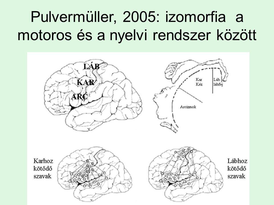 Pulvermüller, 2005: izomorfia a motoros és a nyelvi rendszer között