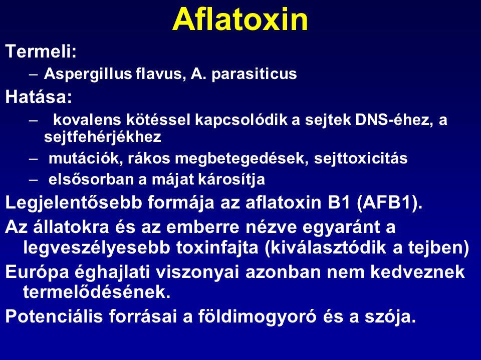 Aflatoxin Termeli: –Aspergillus flavus, A. parasiticus Hatása: –kovalens kötéssel kapcsolódik a sejtek DNS-éhez, a sejtfehérjékhez – mutációk, rákos m