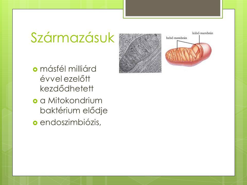 Származásuk  másfél milliárd évvel ezelőtt kezdődhetett  a Mitokondrium baktérium elődje  endoszimbiózis,