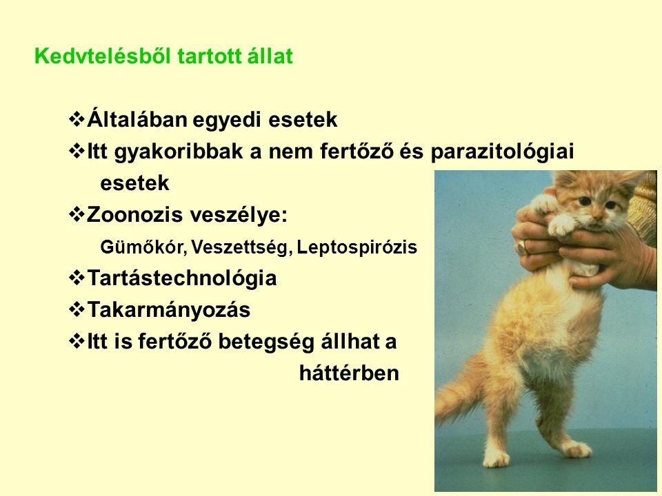 Kedvtelésből tartott állat  Általában egyedi esetek  Itt gyakoribbak a nem fertőző és parazitológiai esetek  Zoonozis veszélye: Gümőkór, Veszettség