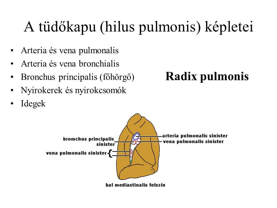 A tüdőkapu (hilus pulmonis) képletei Arteria és vena pulmonalis Arteria és vena bronchialis Bronchus principalis (főhörgő) Nyirokerek és nyirokcsomók