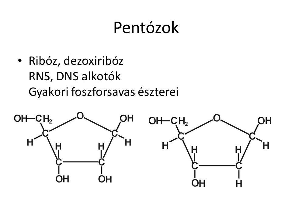 Pentózok Ribóz, dezoxiribóz RNS, DNS alkotók Gyakori foszforsavas észterei