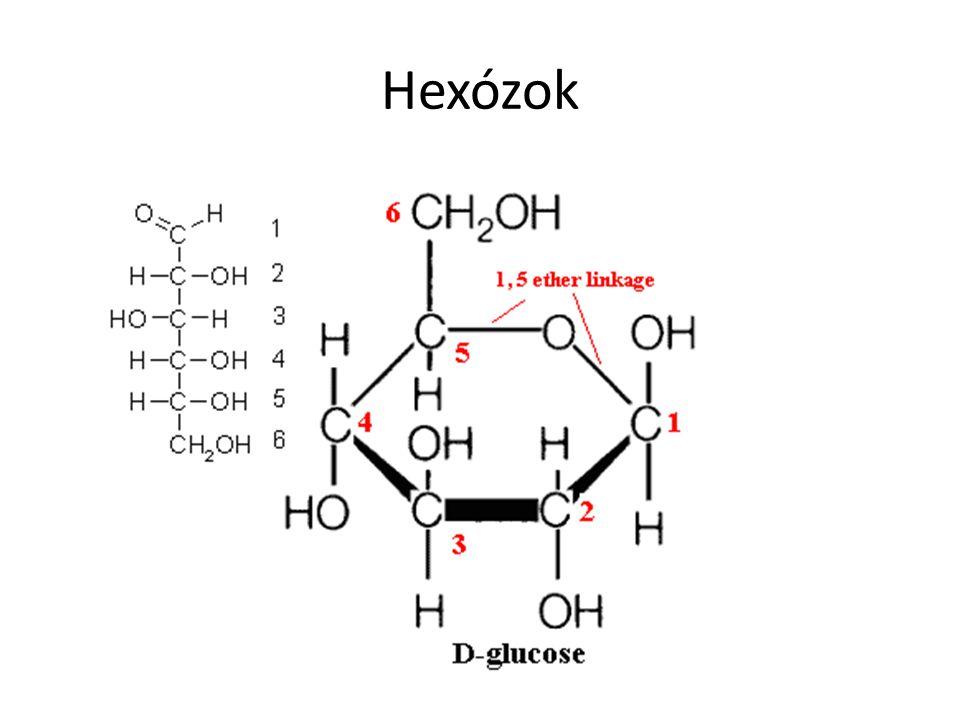 A fotoszintézis terméke Belőle poliszacharidok Az emberi sejtek tápláléka (vércukor) Oldott állapotban 2 forma, mely egymásba átalakul 1% mindig lánc 99% gyűrűs Gyűrű – 1.
