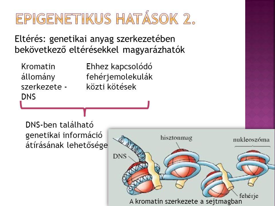 Eltérés: genetikai anyag szerkezetében bekövetkező eltérésekkel magyarázhatók Kromatin állomány szerkezete - DNS Ehhez kapcsolódó fehérjemolekulák közti kötések DNS-ben található genetikai információ átírásának lehetősége A kromatin szerkezete a sejtmagban