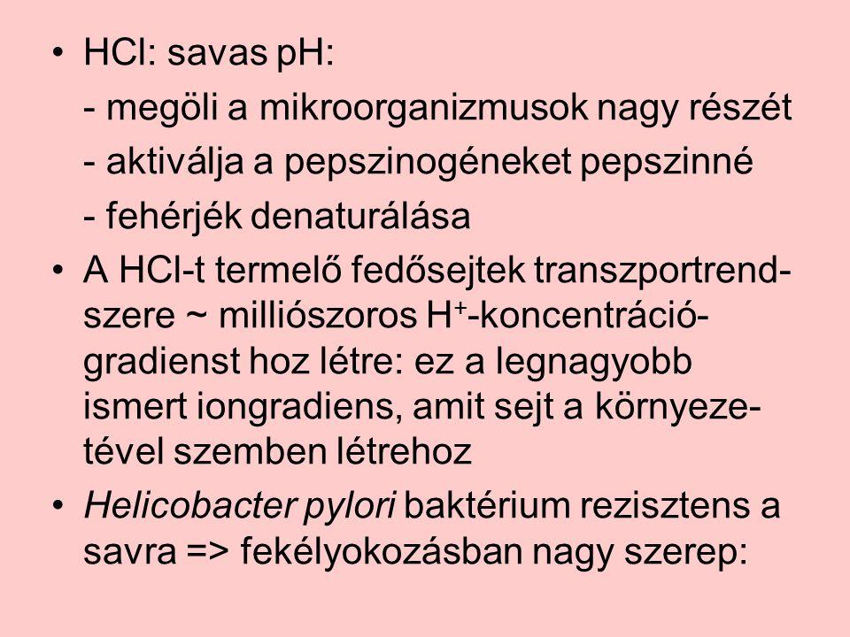 HCl: savas pH: - megöli a mikroorganizmusok nagy részét - aktiválja a pepszinogéneket pepszinné - fehérjék denaturálása A HCl-t termelő fedősejtek transzportrend- szere ~ milliószoros H + -koncentráció- gradienst hoz létre: ez a legnagyobb ismert iongradiens, amit sejt a környeze- tével szemben létrehoz Helicobacter pylori baktérium rezisztens a savra => fekélyokozásban nagy szerep: