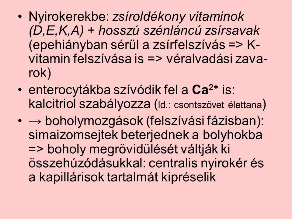 Nyirokerekbe: zsíroldékony vitaminok (D,E,K,A) + hosszú szénláncú zsírsavak (epehiányban sérül a zsírfelszívás => K- vitamin felszívása is => véralvadási zava- rok) enterocytákba szívódik fel a Ca 2+ is: kalcitriol szabályozza ( ld.: csontszövet élettana ) → boholymozgások (felszívási fázisban): simaizomsejtek beterjednek a bolyhokba => boholy megrövidülését váltják ki összehúzódásukkal: centralis nyirokér és a kapillárisok tartalmát kipréselik