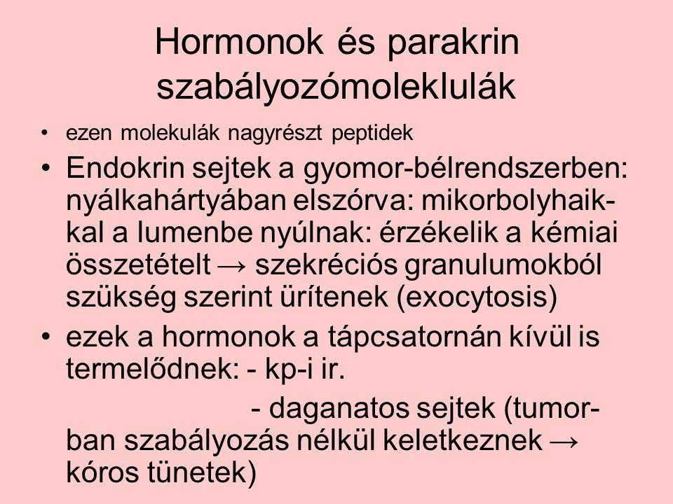 Hormonok és parakrin szabályozómoleklulák ezen molekulák nagyrészt peptidek Endokrin sejtek a gyomor-bélrendszerben: nyálkahártyában elszórva: mikorbolyhaik- kal a lumenbe nyúlnak: érzékelik a kémiai összetételt → szekréciós granulumokból szükség szerint ürítenek (exocytosis) ezek a hormonok a tápcsatornán kívül is termelődnek: - kp-i ir.