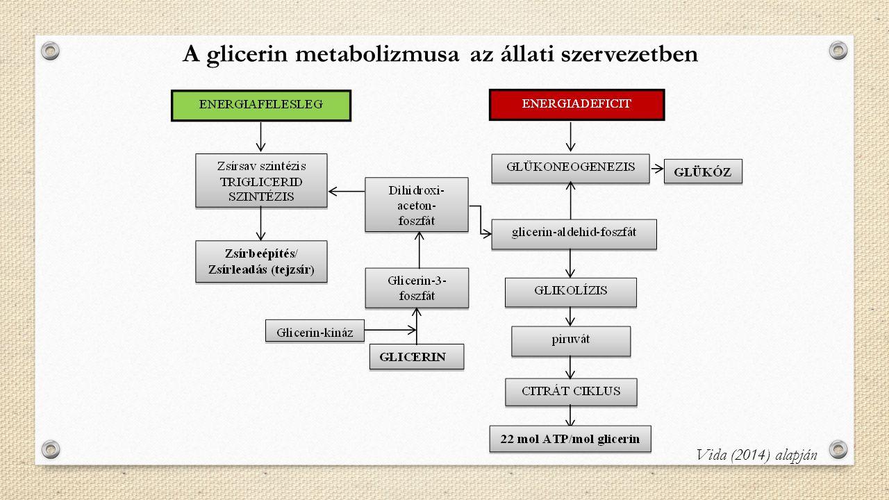 A glicerin metabolizmusa az állati szervezetben Vida (2014) alapján