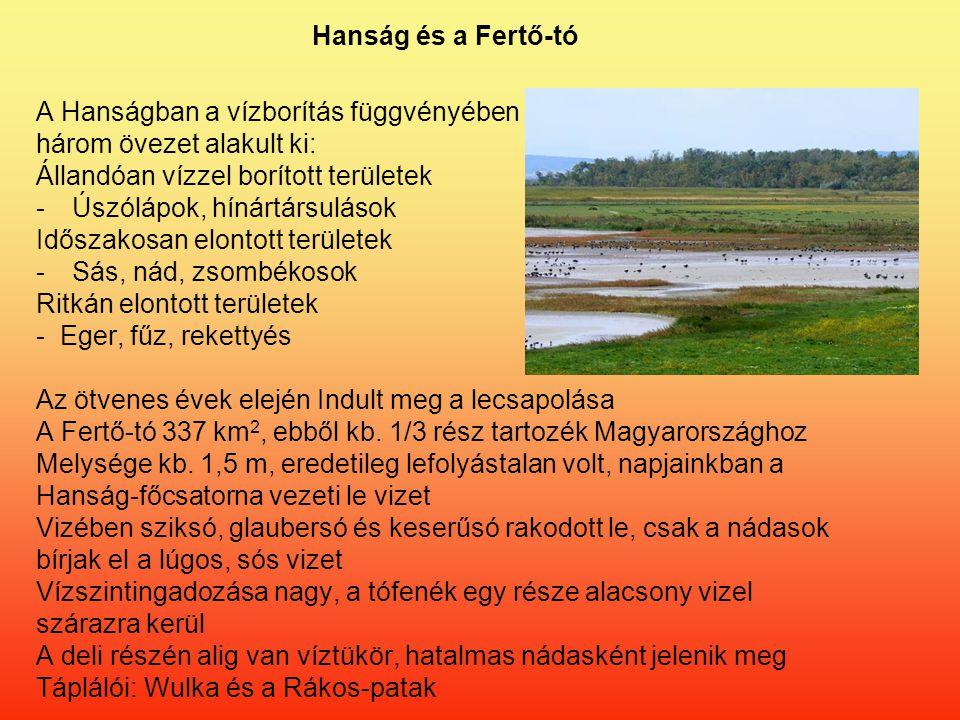 Hanság és a Fertő-tó A Hanságban a vízborítás függvényében három övezet alakult ki: Állandóan vízzel borított területek -Úszólápok, hínártársulások Időszakosan elontott területek -Sás, nád, zsombékosok Ritkán elontott területek - Eger, fűz, rekettyés Az ötvenes évek elején Indult meg a lecsapolása A Fertő-tó 337 km 2, ebből kb.