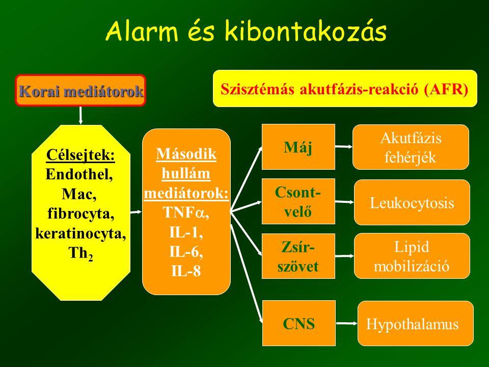 """13 """"Riasztás"""" makrofág endotel fibroblaszt keratinocita T sejt TESTSZERTE ELŐFORDULÓ SEJTEK IL-6 IL-1 TNF  IFN  *"""