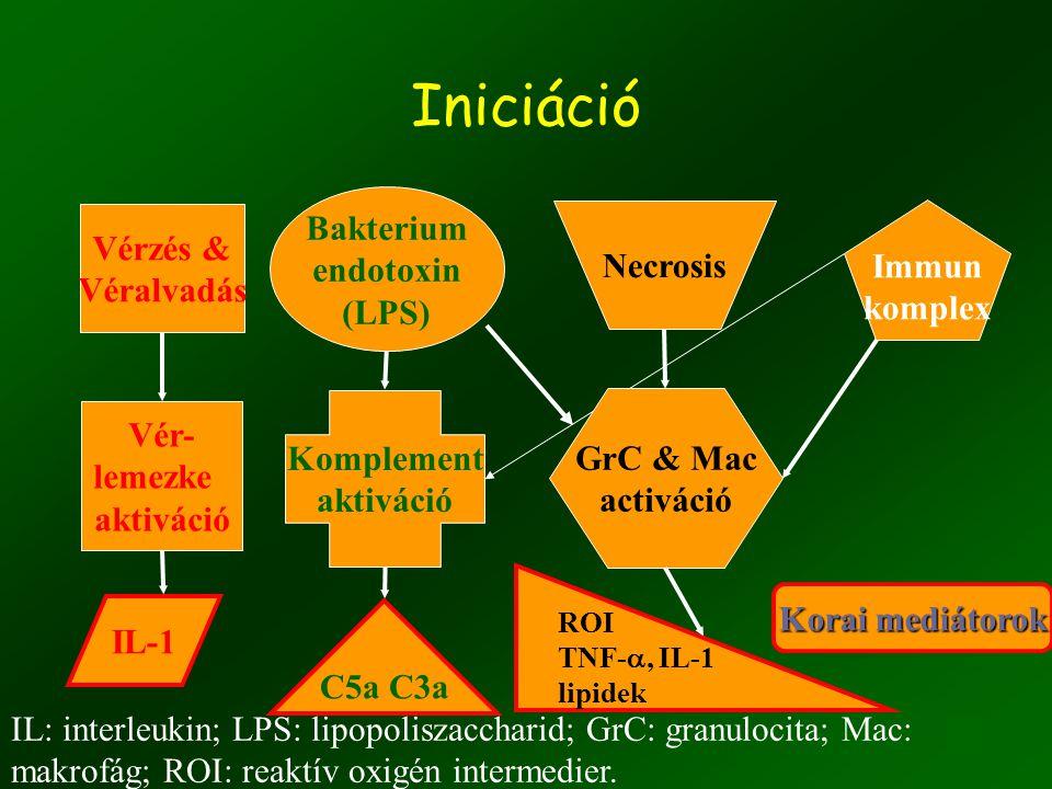 7 Iniciáció Korai mediátorok Immun komplex Vérzés & Véralvadás Vér- lemezke aktiváció IL-1 Bakterium endotoxin (LPS) Komplement aktiváció C5a C3a Necrosis GrC & Mac activáció ROI TNF- , IL-1 lipidek IL: interleukin; LPS: lipopoliszaccharid; GrC: granulocita; Mac: makrofág; ROI: reaktív oxigén intermedier.