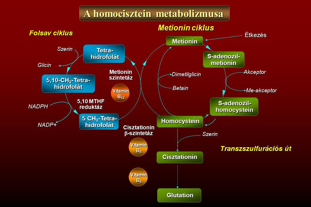 A homocisztein metabolizmusa Metionin S-adenozil-metionin S-adenozil-homocystein HomocysteinÉtkezés Akceptor Me-akceptor Dimetilglicin Betain NADP+ Tetra-hidrofolát 5,10-CH 3 -Tetra- hidrofolát 5 CH 3 -Tetra- hidrofolát Folsav ciklus Szerin Glicin NADPH Vitamin B 12 Metioninszintetáz 5,10 MTHF reduktáz Vitamin B 6 Glutation Cisztationin Szerin Transzszulfurációs út Cisztationin  -szintetáz Vitamin B 6 Metionin ciklus