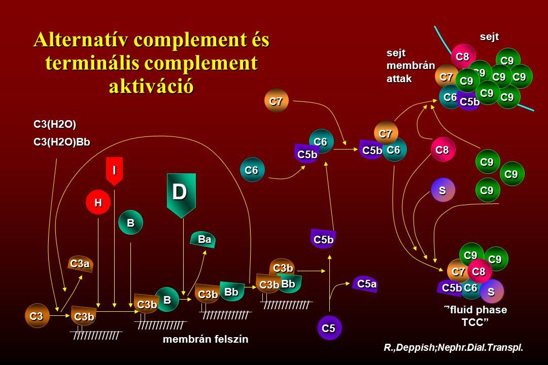 H Ba C7 C6 C5b C5a C3b B Bb Bb R.,Deppish;Nephr.Dial.Transpl. C3(H2O) C3(H2O)Bb ///////////// C3 membrán felszín C3b C3b C3b C3a C5 C6 C5b Alternatív