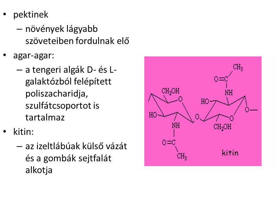 pektinek – növények lágyabb szöveteiben fordulnak elő agar-agar: – a tengeri algák D- és L- galaktózból felépített poliszacharidja, szulfátcsoportot is tartalmaz kitin: – az izeltlábúak külső vázát és a gombák sejtfalát alkotja kitin