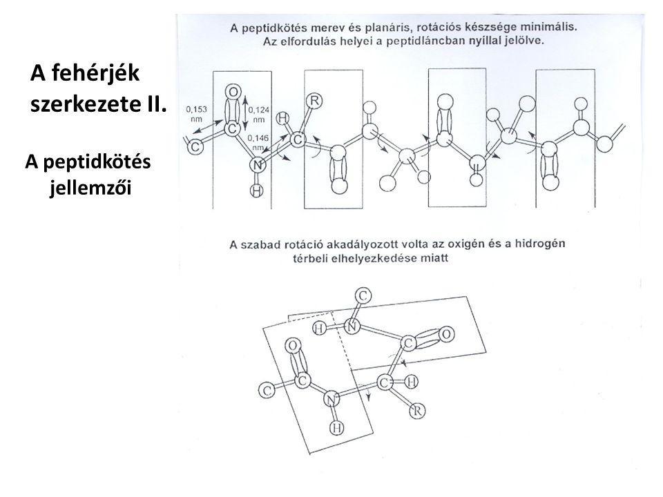 A fehérjék szerkezete II. A peptidkötés jellemzői