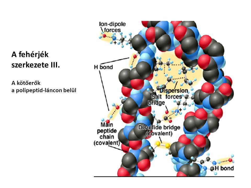 A fehérjék szerkezete III. A kötőerők a polipeptid-láncon belül