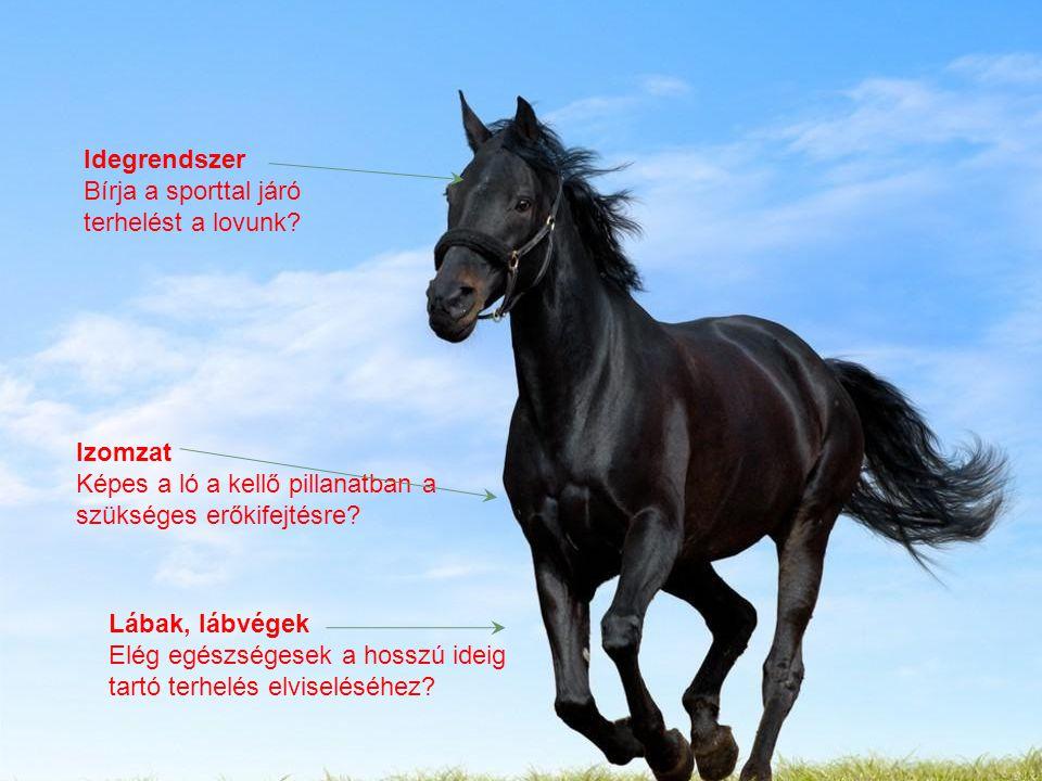 """A modern """"menekülőgép"""" Idegrendszer Bírja a sporttal járó terhelést a lovunk? Izomzat Képes a ló a kellő pillanatban a szükséges erőkifejtésre? Lábak,"""