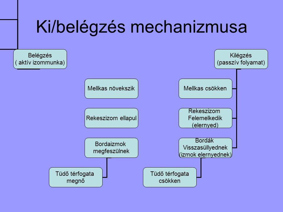 Ki/belégzés mechanizmusa Belégzés ( aktív izommunka) Mellkas növekszik Rekeszizom ellapul Bordaizmok megfeszülnek Tüdő térfogata megnő Kilégzés (passzív folyamat) Mellkas csökken Rekeszizom Felemelkedik (elernyed) Bordák Visszasüllyednek (izmok elernyednek) Tüdő térfogata csökken