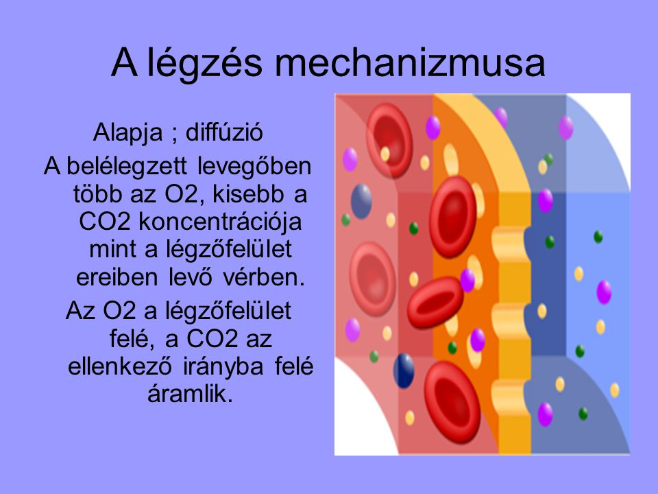 Tüdőgyulladás A tüdőgyulladás a tüdőszövet gyulladása, de emellett érintettek lehetnek a hörgők és a hörgők körüli szövetek is.