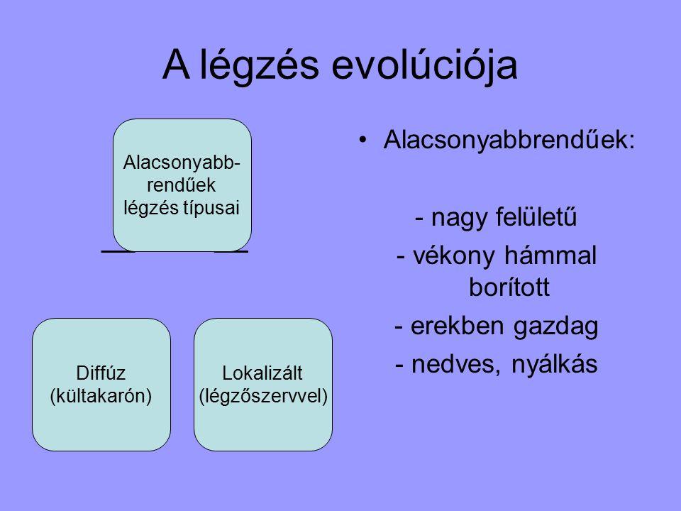 A légzés evolúciója Alacsonyabbrendűek: - nagy felületű - vékony hámmal borított - erekben gazdag - nedves, nyálkás Alacsonyabb- rendűek légzés típusai Diffúz (kültakarón) Lokalizált (légzőszervvel)