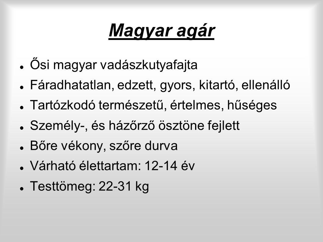 Magyar agár Ősi magyar vadászkutyafajta Fáradhatatlan, edzett, gyors, kitartó, ellenálló Tartózkodó természetű, értelmes, hűséges Személy-, és házőrző ösztöne fejlett Bőre vékony, szőre durva Várható élettartam: 12-14 év Testtömeg: 22-31 kg