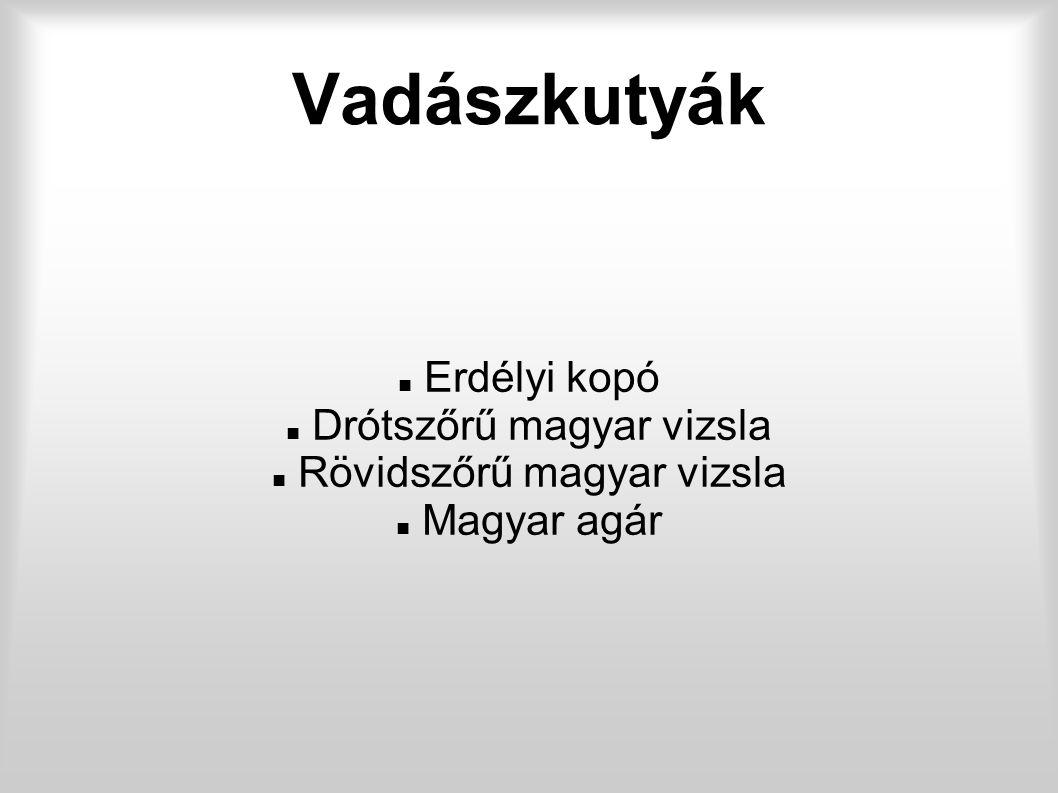 Vadászkutyák Erdélyi kopó Drótszőrű magyar vizsla Rövidszőrű magyar vizsla Magyar agár