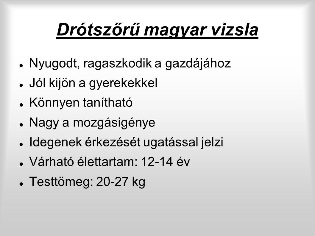 Drótszőrű magyar vizsla Nyugodt, ragaszkodik a gazdájához Jól kijön a gyerekekkel Könnyen tanítható Nagy a mozgásigénye Idegenek érkezését ugatással jelzi Várható élettartam: 12-14 év Testtömeg: 20-27 kg