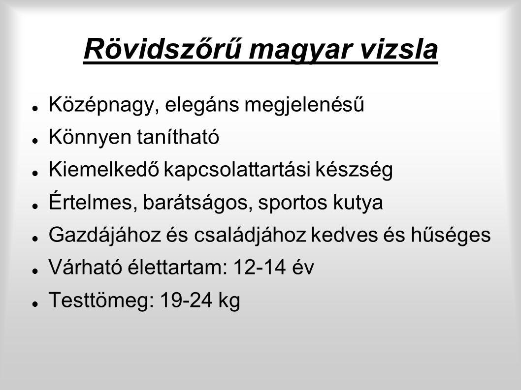 Rövidszőrű magyar vizsla Középnagy, elegáns megjelenésű Könnyen tanítható Kiemelkedő kapcsolattartási készség Értelmes, barátságos, sportos kutya Gazdájához és családjához kedves és hűséges Várható élettartam: 12-14 év Testtömeg: 19-24 kg