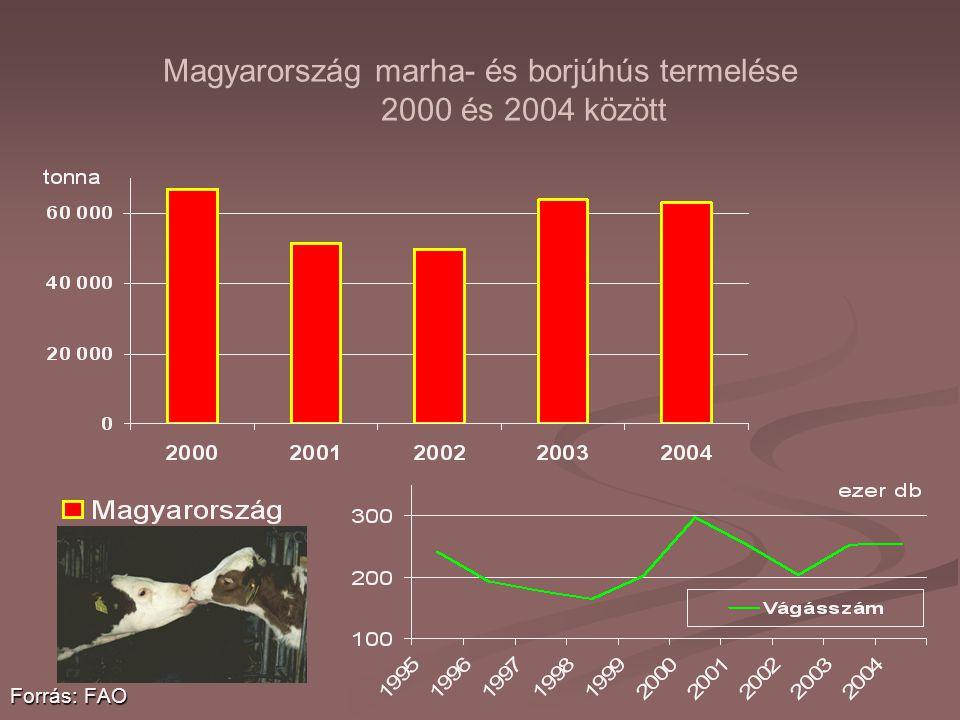 Magyarország marha- és borjúhús termelése 2000 és 2004 között Forrás: FAO