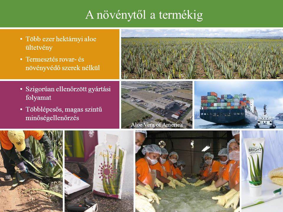 A növénytől a termékig Több ezer hektárnyi aloe ültetvény Termesztés rovar- és növényvédő szerek nélkül Szigorúan ellenőrzött gyártási folyamat Többlépcsős, magas szintű minőségellenőrzés Aloe Vera of America