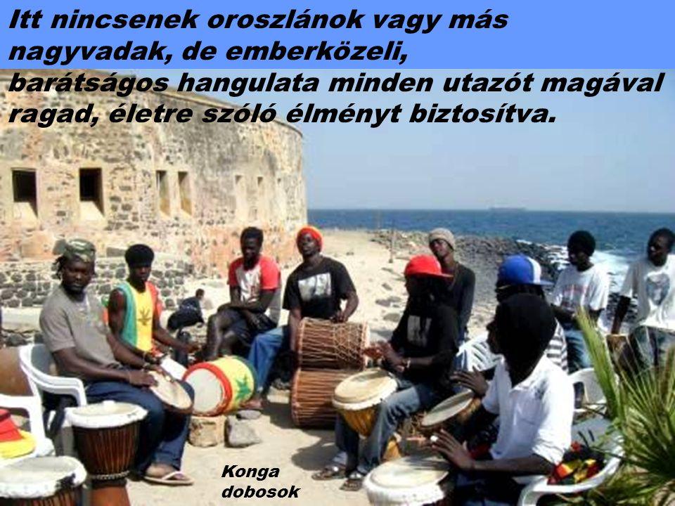 Afrika legnyugatibb országa, Szenegál nagyon vonzó hely Az Atlanti-óceán mentén húzódó, több száz kilométeres tengerpartja, különleges városai és vendégszerető lakosai miatt..