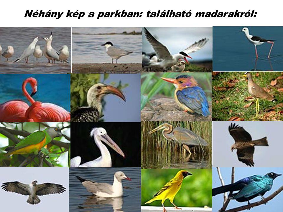 Itt található a Föld egyik madarakban leggazdagabb vidéke mely a Világörökség része