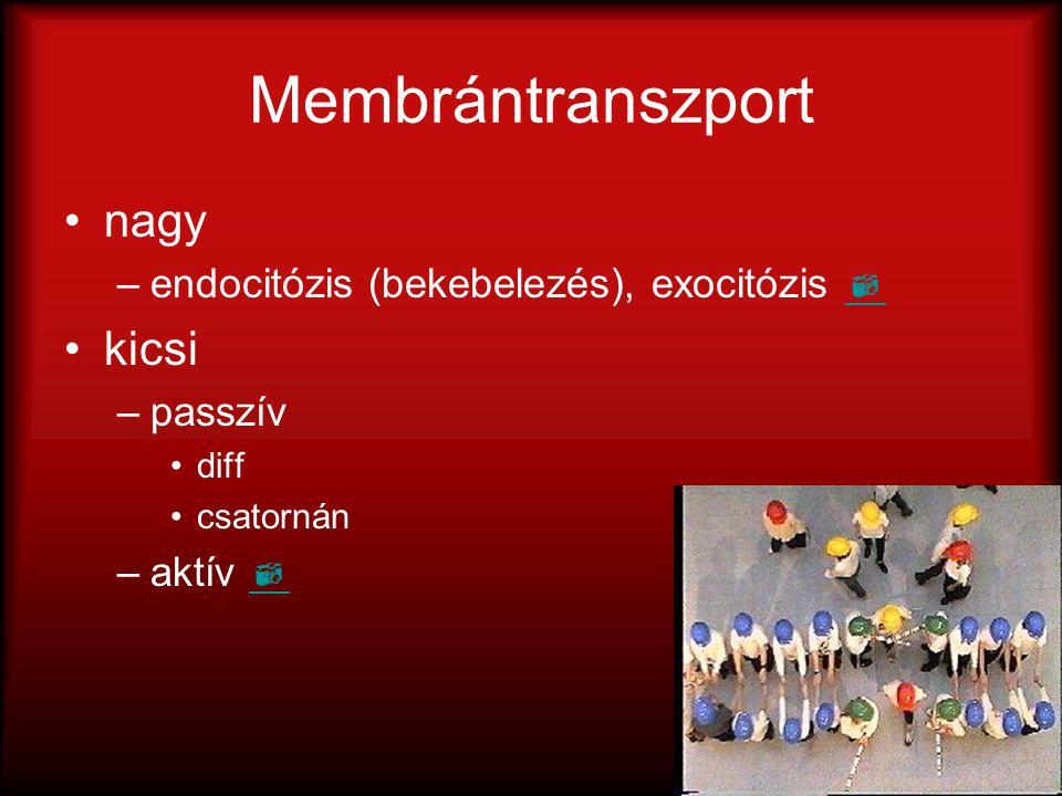 Membrántranszport nagy –endocitózis (bekebelezés), exocitózis   kicsi –passzív diff csatornán –aktív  
