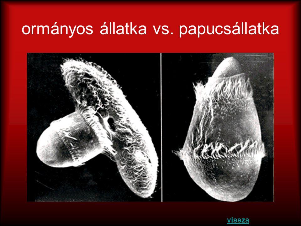 ormányos állatka vs. papucsállatka vissza