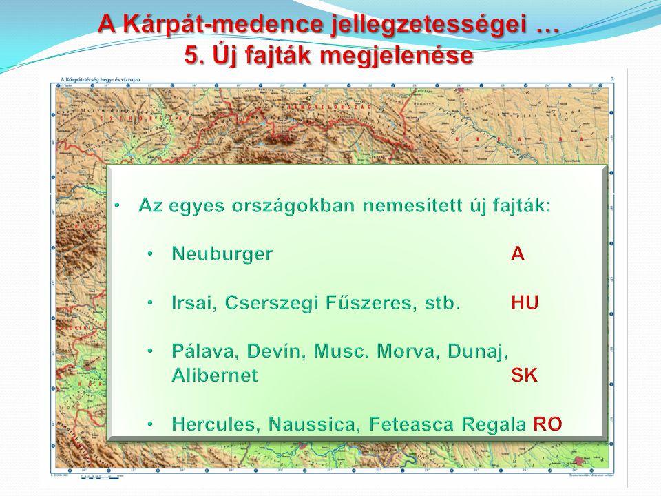 1.Szerémség Balaton-v 2. Balaton-v. 3. Szekszárd 4.Somló 5.