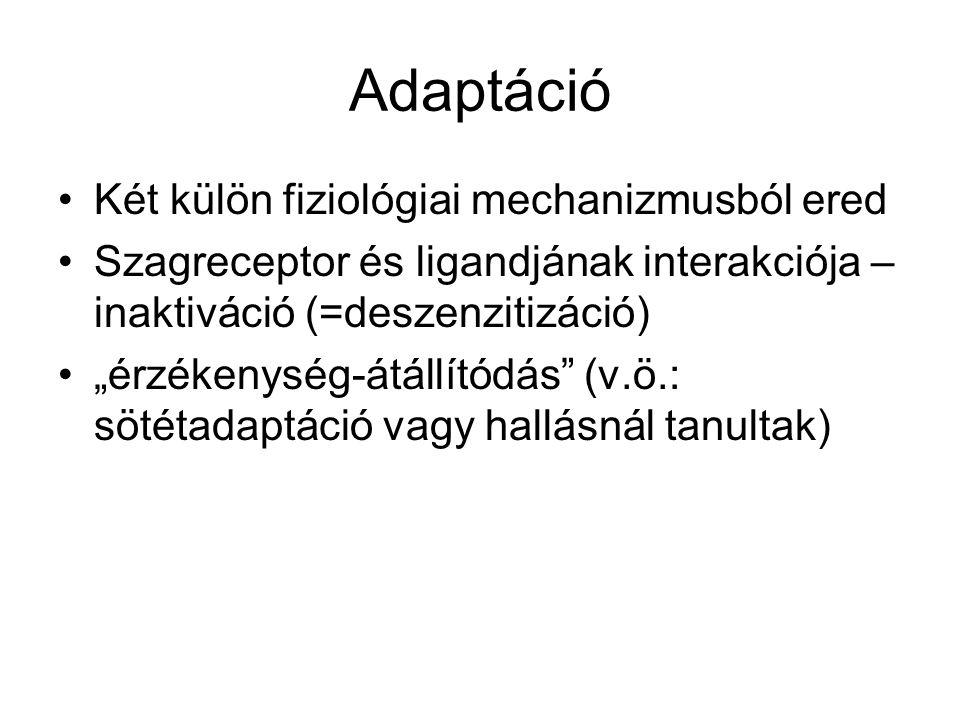 """Adaptáció Két külön fiziológiai mechanizmusból ered Szagreceptor és ligandjának interakciója – inaktiváció (=deszenzitizáció) """"érzékenység-átállítódás (v.ö.: sötétadaptáció vagy hallásnál tanultak)"""