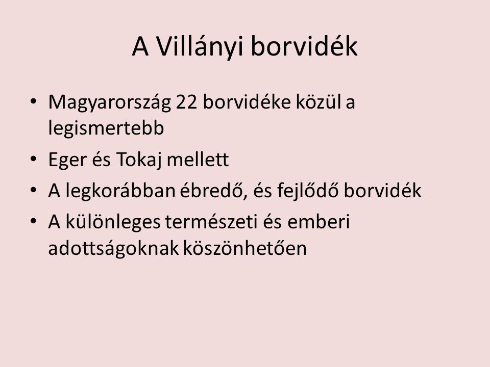 A Villányi borvidék Magyarország 22 borvidéke közül a legismertebb Eger és Tokaj mellett A legkorábban ébredő, és fejlődő borvidék A különleges termés
