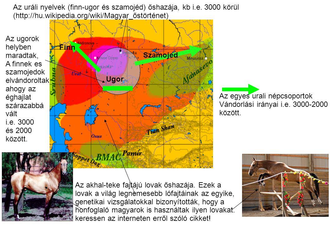Az uráli nyelvek (finn-ugor és szamojéd) őshazája, kb i.e. 3000 körül (http://hu.wikipedia.org/wiki/Magyar_őstörténet) Finn Szamojed Ugor Az egyes ura