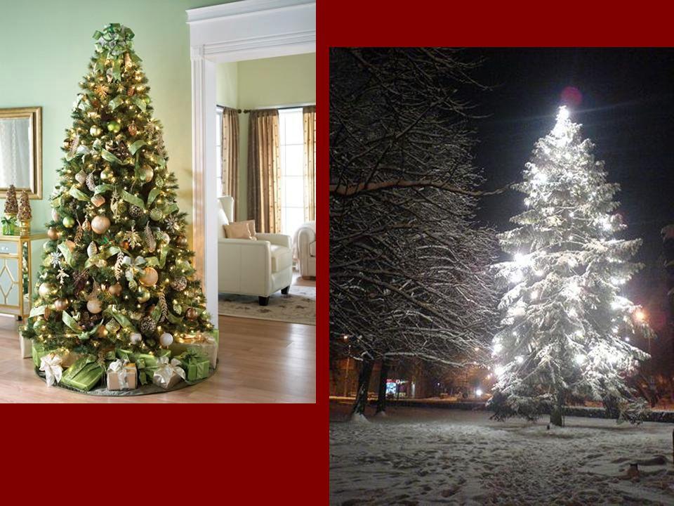 A Karácsonyfa legendája szerint Luther Márton a téli erdőben sé- tált és gyönyörködött a csodaszép fe- nyőkben, annyira megragadta a nagy vallástudóst