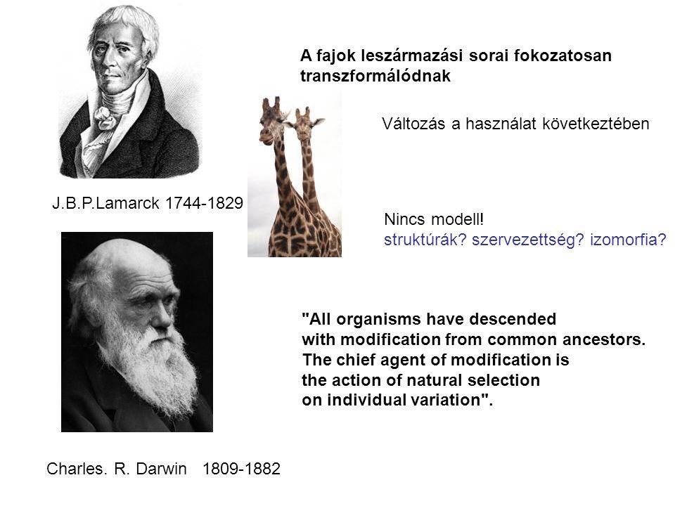 J.B.P.Lamarck 1744-1829 A fajok leszármazási sorai fokozatosan transzformálódnak Változás a használat következtében Nincs modell! struktúrák? szerveze
