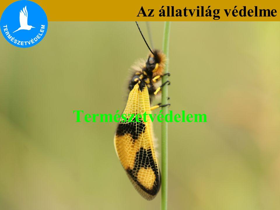 Természetvédelem Az állatvilág védelme
