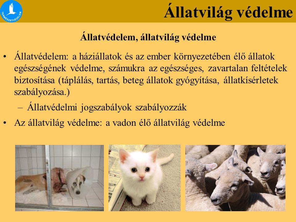 Állatvilág védelme Állatvédelem, állatvilág védelme Állatvédelem: a háziállatok és az ember környezetében élő állatok egészségének védelme, számukra az egészséges, zavartalan feltételek biztosítása (táplálás, tartás, beteg állatok gyógyítása, állatkísérletek szabályozása.) –Állatvédelmi jogszabályok szabályozzák Az állatvilág védelme: a vadon élő állatvilág védelme