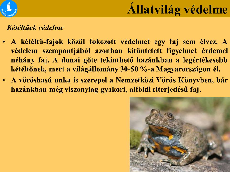 Kétéltűek védelme A kétéltű-fajok közül fokozott védelmet egy faj sem élvez. A védelem szempontjából azonban kitüntetett figyelmet érdemel néhány faj.