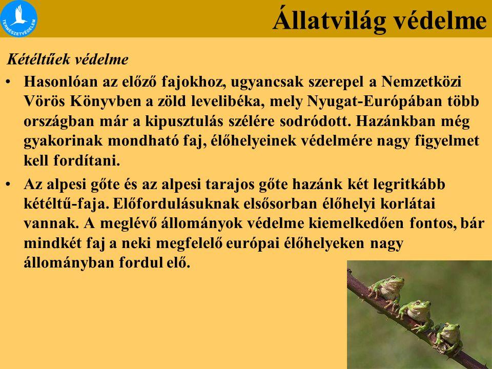 Kétéltűek védelme Hasonlóan az előző fajokhoz, ugyancsak szerepel a Nemzetközi Vörös Könyvben a zöld levelibéka, mely Nyugat-Európában több országban már a kipusztulás szélére sodródott.
