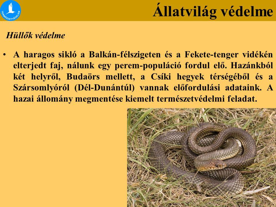Hüllők védelme A haragos sikló a Balkán-félszigeten és a Fekete-tenger vidékén elterjedt faj, nálunk egy perem-populáció fordul elő.