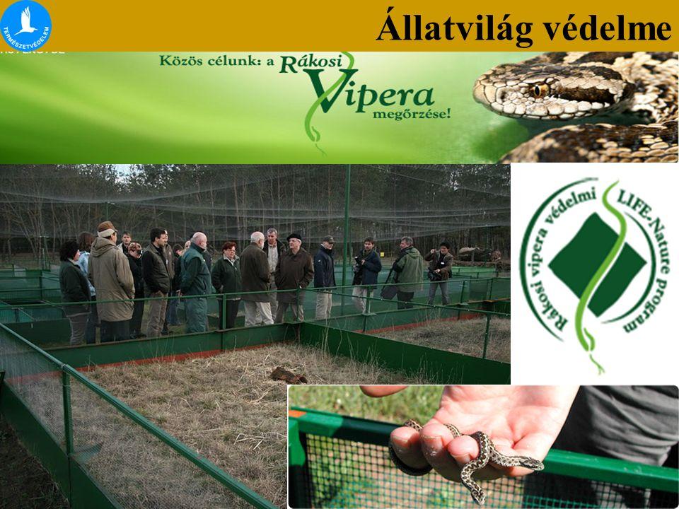 Hüllők védelme Állatvilág védelme