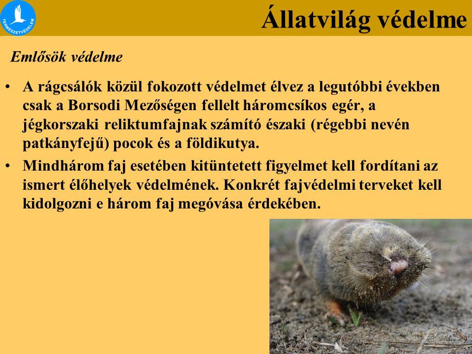 Emlősök védelme A rágcsálók közül fokozott védelmet élvez a legutóbbi években csak a Borsodi Mezőségen fellelt háromcsíkos egér, a jégkorszaki reliktu