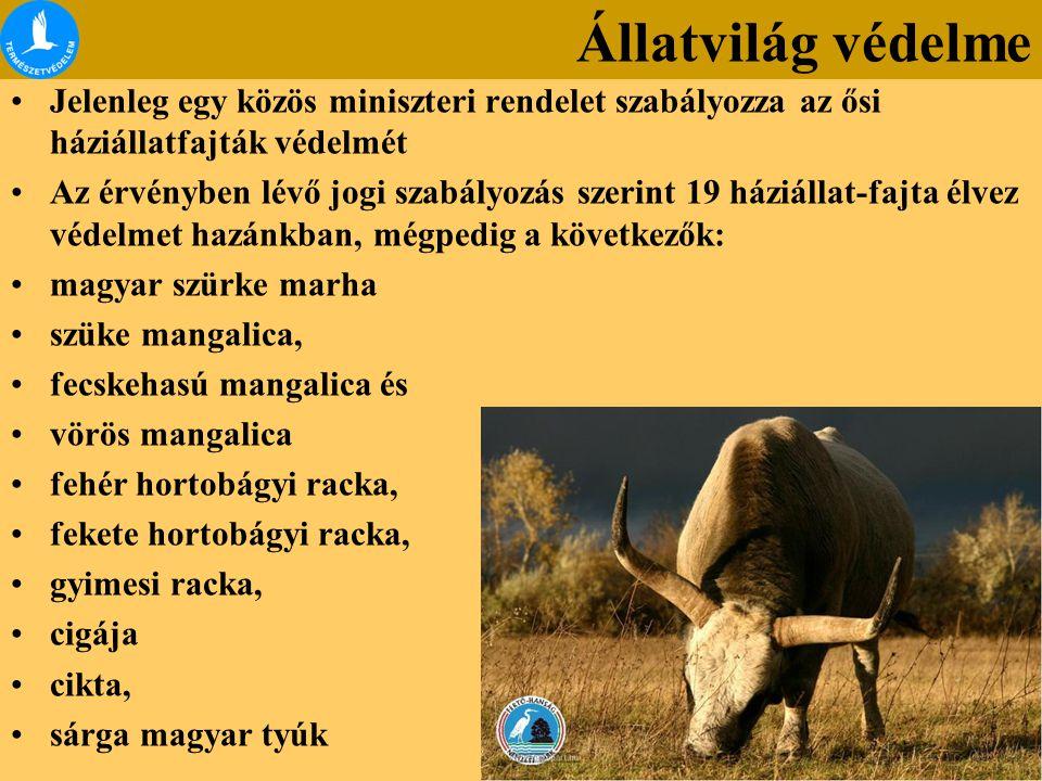 Jelenleg egy közös miniszteri rendelet szabályozza az ősi háziállatfajták védelmét Az érvényben lévő jogi szabályozás szerint 19 háziállat-fajta élvez védelmet hazánkban, mégpedig a következők: magyar szürke marha szüke mangalica, fecskehasú mangalica és vörös mangalica fehér hortobágyi racka, fekete hortobágyi racka, gyimesi racka, cigája cikta, sárga magyar tyúk Állatvilág védelme